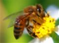 Thinking Bee