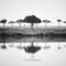 Serengeti_016