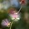 70_Flowers_IMG_6149