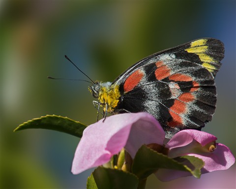 butterfly01062012_994v2c