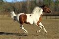 My free Horse