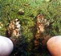 Foot spa by fish