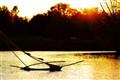 Adrift on golden waters