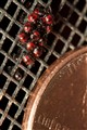 Newly Hatched Stink Bugs