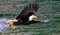 Eagle Juneau