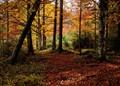 The most colourful season