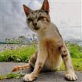 Haggard cat