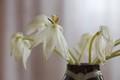 White in a vase