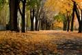 The November's road