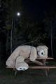 bear waits