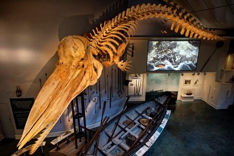Sperm Whale Skeleton