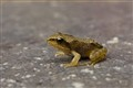 Very young frog on the move