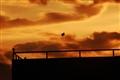 Alone Kite.