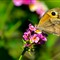 Butterfly in Algarve