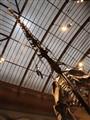 Berlin_paleontological museum