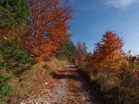 Autumn-2013-06