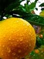 The Orange