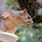 Squirrel 0273