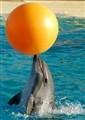 DSC_0138_dolphin