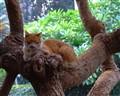 just a little nap