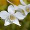 orchidDSC_0154_018