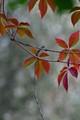 an autumn image