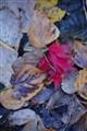 Fall2010 089