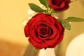 ROSE IN A VASE