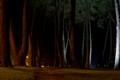 Hagley park at night