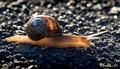 Snail2_IMGP6417
