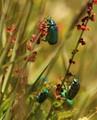 Climbing beetles