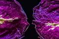 Dessicated Primrose Petals