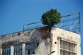 Tree in a Building
