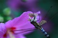 Moth Dismembered