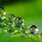 morning dew balls