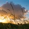 VH_20130405_Sunset Pomona Cootharaba_3611