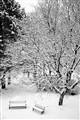 Winter Graphics