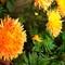 My Garden Flower 2