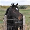Moab Horse DSC_0103-1