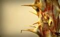 Killer Thorn!
