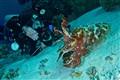 Posing Cuttlefish