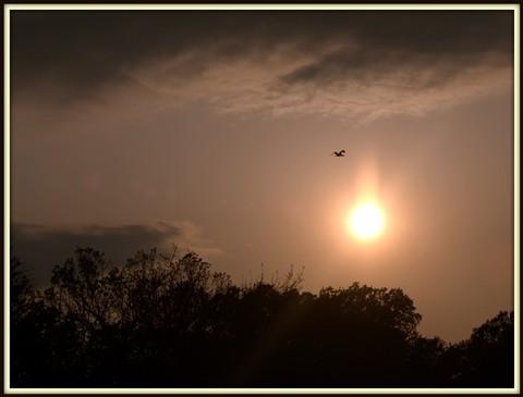 Cormorant and sun