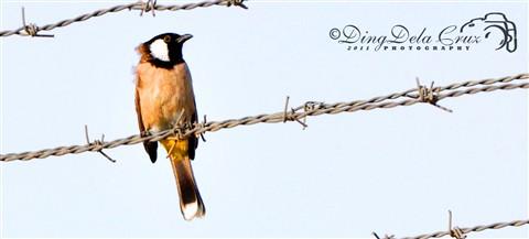 Birds Of Saudi Arabia 02