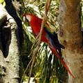 PARROT FLORIDA