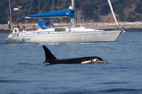 whale.1