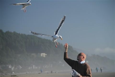 seagulls landing.