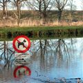 No swimming dogs