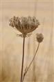 098-316 Valley Flora