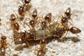 An army of ants carries out the circle of life