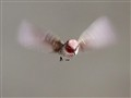 Busy Wings